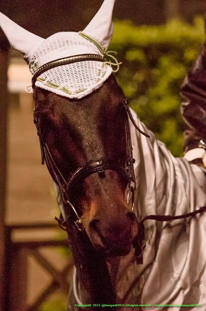 ボンネビルレコード「まあでも走るお馬さんたちはそんなこと言ってられんからね、がんばれ~」【141022大井11Rマイルグランプリ】
