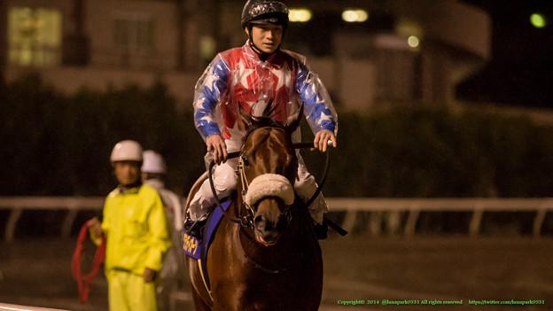 グランディオーソ(御神本)「重賞馬としての風格はあると思うんですけどね~」【141022大井11Rマイルグランプリ】