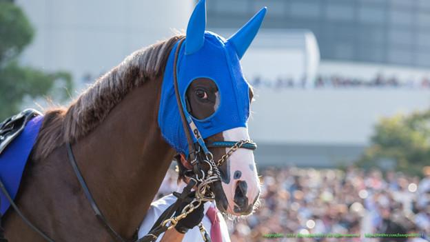 ハギノハイブリッド「京都新聞杯の勝ち馬がここにいるんですけれどね~(ニヤリ」【141026京都11R菊花賞】 #ジロリ馬
