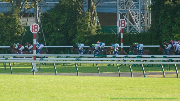 スタート。2角のコーナーワークを活かしてコスモバルクが先頭に立つ【071028東京11R天皇賞(秋)】