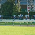 Photos: スタート。2角のコーナーワークを活かしてコスモバルクが先頭に立つ【071028東京11R天皇賞(秋)】