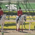 Photos: シロベエ「今日は一日中真っ白祭りですよ、お楽しみに」パリスマウンテン「…」ホワイトベッセル「すんません…」【141026京都1R】