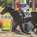 Photos: フィドゥーシア、5馬身差をつけて圧勝【141026京都1R】