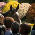 Photos: フィドゥーシア「そんなところからみてないで前でちゃんと撮りなさいよ」【141026京都1R】 #ジロリ馬