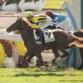写真: アッシュゴールド、ヴェルステルキングに追いつき半馬身差で初勝利【141026京都3R】