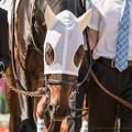 Photos: (13)レレオーネ「さっき大坪さんに『レレオーネくん、たぶんいちばん上の姉ちゃんと同じく馬名間違えるけどごめんね』と言われました」【141026京都5R新馬】