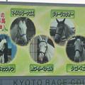 Photos: 午後の皆さんです、真っ白【141026京都5R新馬】