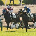 Photos: 逃げてきたウインガニオンに外からタイセイアプローズが襲いかかる【141026京都5R新馬】