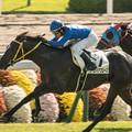 Photos: タイセイアプローズ、並ぶことなくウインガニオンを一気に差し切る【141026京都5R新馬】