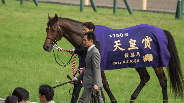 スピルバーグ「宴たけなわなんですかね、ぼくはこの辺で失礼します~」【141102東京11R天皇賞(秋)】