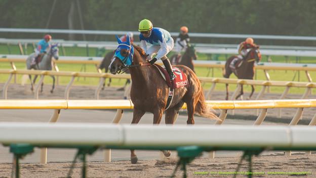 アドマイヤジュピタ「いやー勝っちゃった~重賞勝つと嬉しいもんですね~」【071104東京11Rアルゼンチン共和国杯】