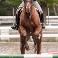 Photos: マイネルキッツ「グラジャン馬様に教えていただきたいものですな(ほらよっと」【141108根岸】