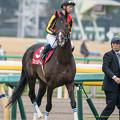 フェイムゲーム(北村宏)「ほーれ、北村さんも2週連続で勝つ気まんm…でもなさそうだ…」【141109東京11Rアルゼンチン共和国杯】