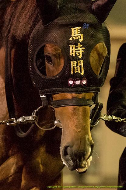 オウマタイム「チークピーシーズの『馬時間』見える?は?みえにくい?ちゃんと撮ってよ!」【141112大井11Rハイセイコー記念】