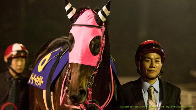 Photos: ?ビービーキャリパー[川崎]「こないだ大井ではじめて勝ったんです」【141112大井11Rハイセイコー記念】