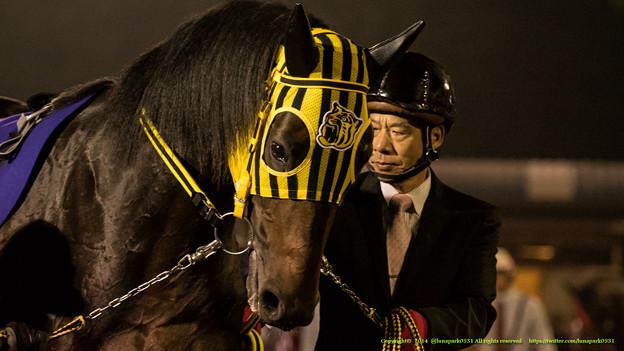 ストゥディウム「先生…ぼくの成績って阪神に影響するのかな…」【141112大井11Rハイセイコー記念】