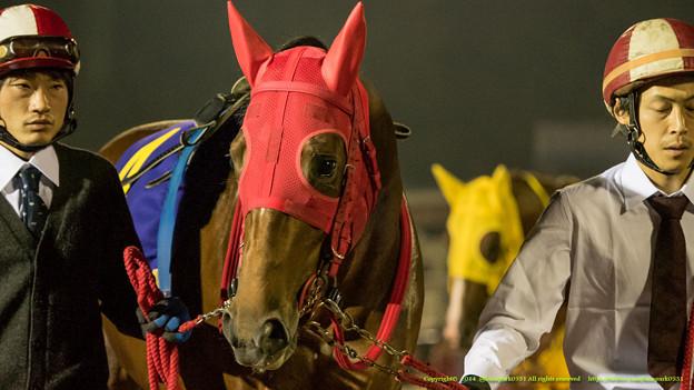 フジノロンシャン「今日はほかのお馬さんみてるより若い女の子見てた方が楽しいや」【141112大井11Rハイセイコー記念】