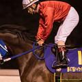 Photos: ブルーマイスキー(山崎誠)「鎌倉のときよりは馬場はイケそうだと思うんだけど」【141112大井11Rハイセイコー記念】