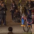 Photos: 引き馬さん「引退式みたいな感じだなこりゃ」ストゥディウム「え!引退すんのやだよ!」【141112大井11Rハイセイコー記念】