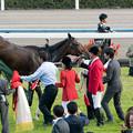 Photos: ラキシス「あー!早くこの馬着脱がせてー!気持ち悪い~!」【141116京都11Rエリザベス女王杯】