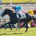 Photos: アンビシャス、危なげなく後続を引き離して新馬勝ち【141116京都5R新馬】