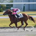 Photos: スマートグレイスは1.1倍に応え8馬身差の圧勝【141116京都6R新馬】