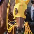 Photos: ?フーラブライド「どうしよう、私重賞2勝もしてるのよねー…」【141116京都11Rエリザベス女王杯】 #見つめうま