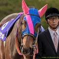 メイショウマンボ「VMのときだっていろいろ言われたものね。『牝馬同士なら』ってところをお見せしたいですね」【141116京都11Rエリザベス女王杯】 #見つめうま