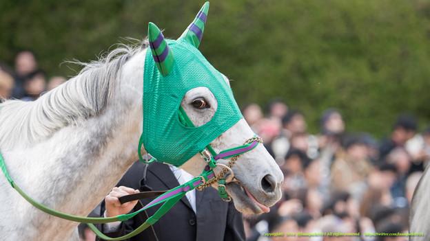 Photos: ホエールキャプチャ「まあ、秘策がないわけではないのですがね(ペロリ」【141116京都11Rエリザベス女王杯】 #ジロリ馬 #ペロリ馬