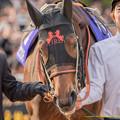 Photos: ?ショウナンパンドラ「秋華賞のときは重賞未勝利馬だったのに~」引き馬さん「さりげなく自慢してるね~」【141116京都11Rエリザベス女王杯】