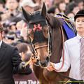 Photos: ショウナンパンドラ「自慢くらいしてもいいでしょ頑張ったんだから」引き馬さん「どうぞどうぞ」【141116京都11Rエリザベス女王杯】