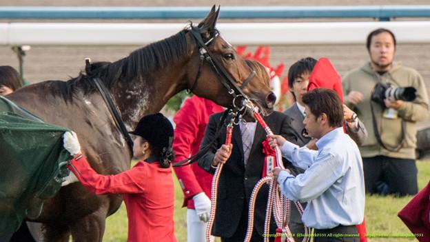 Photos: ラキシス「うわ、着せたと思ったら今度は脱がすの!」【141116京都11Rエリザベス女王杯】