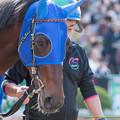 Photos: トーセンギャラリー「うーん…今日も競馬なのかぁ…」【141116京都8R】