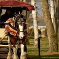Photos: ヴァンガード「馬車馬連合は気合入れて働いてますよ~いい天気だね~」【141124NHP】