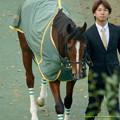 デニムアンドルビー「あんなところからわかるのかしら」引き馬さん「きもいね~」【141130東京11Rジャパンカップ装鞍所】 #JapanCup