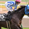 Photos: シャイニープリンス「これは結構微妙な馬場です…」【141130東京9RキャピタルS】
