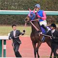 Photos: ?メイショウマンボ(武幸)「ほうほう、これが中山ですか…人すげぇ…」【141228中山10R有馬記念】
