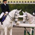 Photos: ウイネツゥー「みんなおっかねえなぁ…」ダンサーズナカヤマ「大丈夫かい?」【141228中山10R有馬記念】
