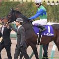 Photos: ?トーセンラー(武豊)「ユタカさん今日はどんな秘策があるのかな・・・ってユタカさん黙ってるね…オトコだね…」【141228中山10R有馬記念】