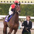 ?ラキシス(C.デムーロ)「牝馬の代表としてジェンティルさんに胸を借りてくるわ」【141228中山10R有馬記念】