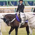 マイネルチャールズ「俺も有馬走りてえなぁ」ダンサーズナカヤマ「走れるか~?」【141228中山10R有馬記念】