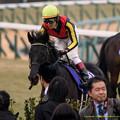 フェノーメノ「やはり3000以上走りたいな~」【141228中山10R有馬記念】
