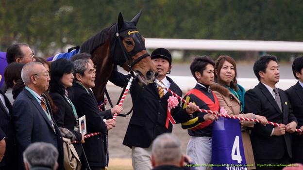 Photos: ジェンティルドンナ「おやっさんもペタペタしてくれて嬉しいわね」【141228中山10R有馬記念】