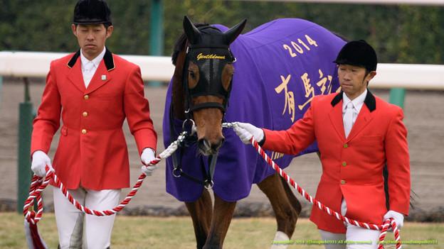 Photos: ジェンティルドンナ「もしかして私、紫も似あってるかもね」【141228中山10R有馬記念】