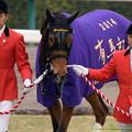 ジェンティルドンナ「もしかして私、紫も似あってるかもね」【141228中山10R有馬記念】