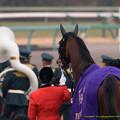 Photos: ジェンティルドンナ「あの人たちについていけばいいのかな~」【141228中山10R有馬記念】