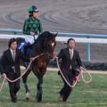 Photos: ジャスタウェイ「みなさんお待たせしました~」【150104京都ジャスタウェイ引退式】