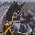 ブレイズアトレイル「ま、まあ僕も+12なのであまり他の馬のこといえないんですけどね…」【150104京都11R京都金杯】