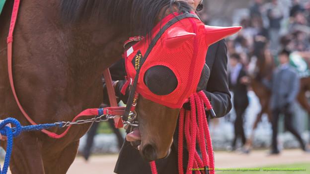 ホウライアキコ「あーん、つぶらな瞳が見せられてないわ~(ペロペロ」【150104京都11R京都金杯】 #ペロリ馬