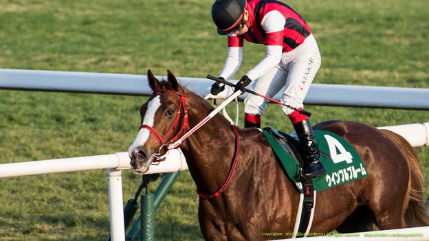 ウインフルブルーム「やっと重賞馬の仲間入りですよ~長かった~」【150104京都11R京都金杯】